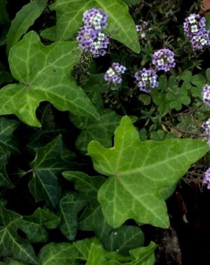 Paisagem Natural/pelo meu jardim