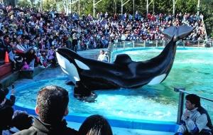 Outros/Orca haciendo el show