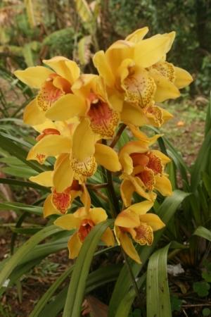 /Orquídeas amarelas e vermelhas