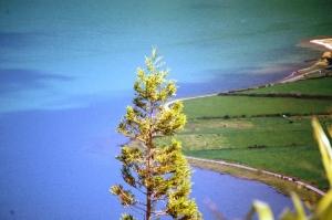 Paisagem Natural/Açores2