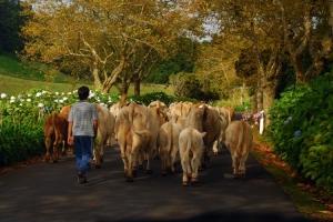 Gentes e Locais/o Guardador de vacas