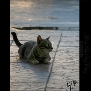 Animais/**O Gato do Faraó**