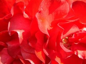 Macro/Flores Vermelhas