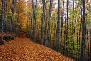 Outros/O bosque encantado