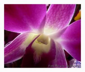 Macro/Orquídea selvagem ...