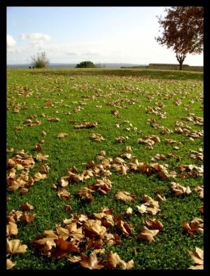 Outros/autumn carpet