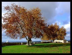 Outros/autumn colours