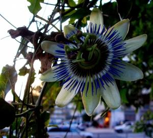 Macro/'Pequena' flor