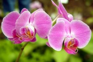 Macro/+Orquídea
