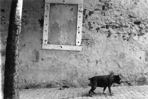 Paisagem Urbana/o cão