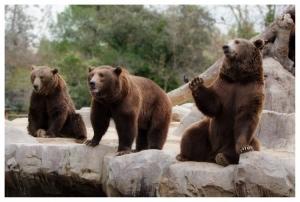 Outros/Familia Urso