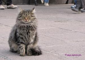 Gentes e Locais/Gato turco
