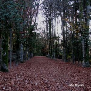 Outros/Manto de Outono