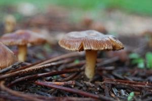 Paisagem Natural/..outro cogumelo...