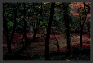 Paisagem Natural/Bosque encantado - Gerês