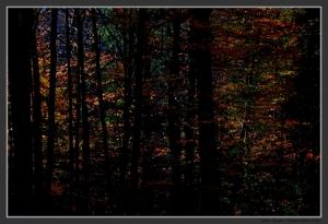 Paisagem Natural/Cores de Outono I