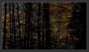 Paisagem Natural/Cores de Outono III