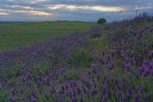 Paisagem Natural/    Fields    