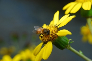 Macro/em busca do nectar