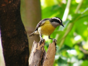 Animais/Fé é o pássaro que sente a luz...