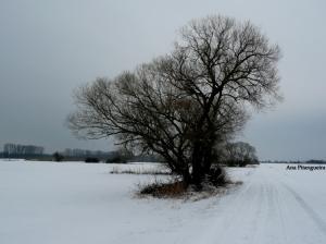 Outros/Inverno...
