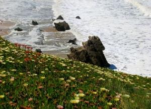 Paisagem Natural/o mar em flor