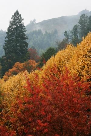 Paisagem Natural/Colors