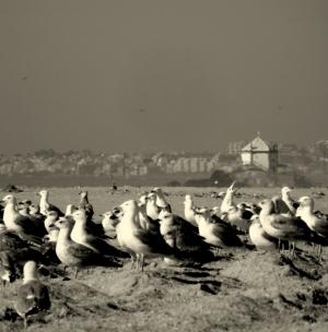 Outros/uma cria de gaivota…