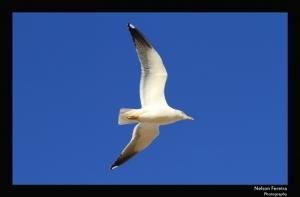 Animais/Hoje queria ter asas...