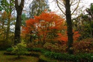 Paisagem Natural/outono ao rubro
