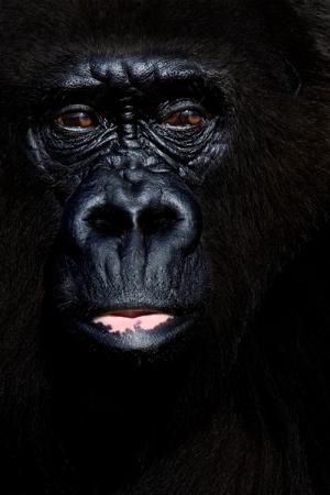 Animais/imagens do mundo animal - Amélia