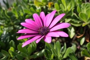 Macro/flor de sábado