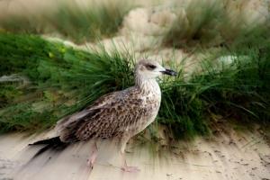 Animais/No olhar de uma gaivota...