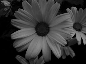 Outros/Daisy