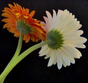 /As cores das flores 3