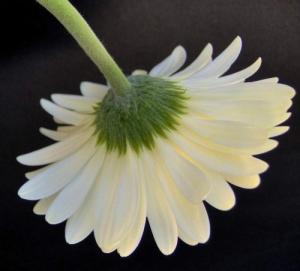 /As cores das flores  4