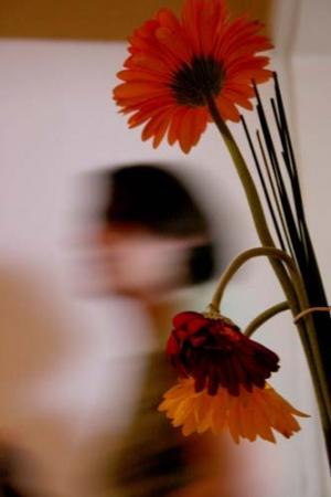 /Três flores e uma Tula