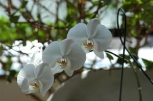 /uma flor branca