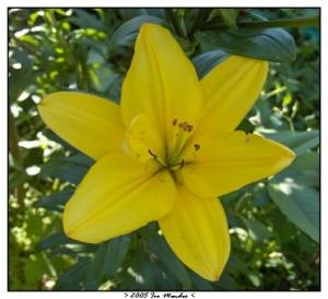 /yellow flower II