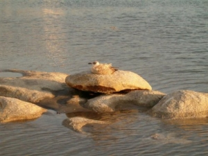 /Sobre a pedra...