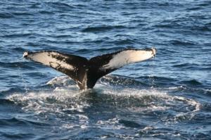 /baleia branca