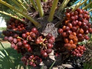 /Palm tree