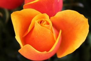 Macro/Florzinha