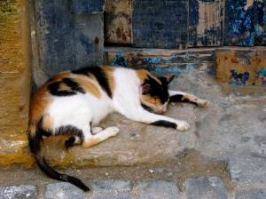 Animais/siesta time