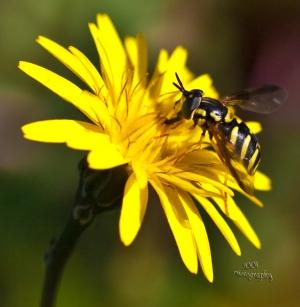 /Precioso nectar