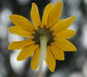 Outros/Flor da vida...