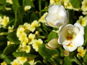 Outros/Flores de Primavera...