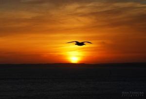 Outros/| Planando junto ao Sol! |