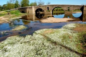 Paisagem Natural/A ponte é uma passagem