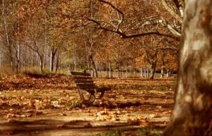 Paisagem Natural/Outono ( a chegar?)
